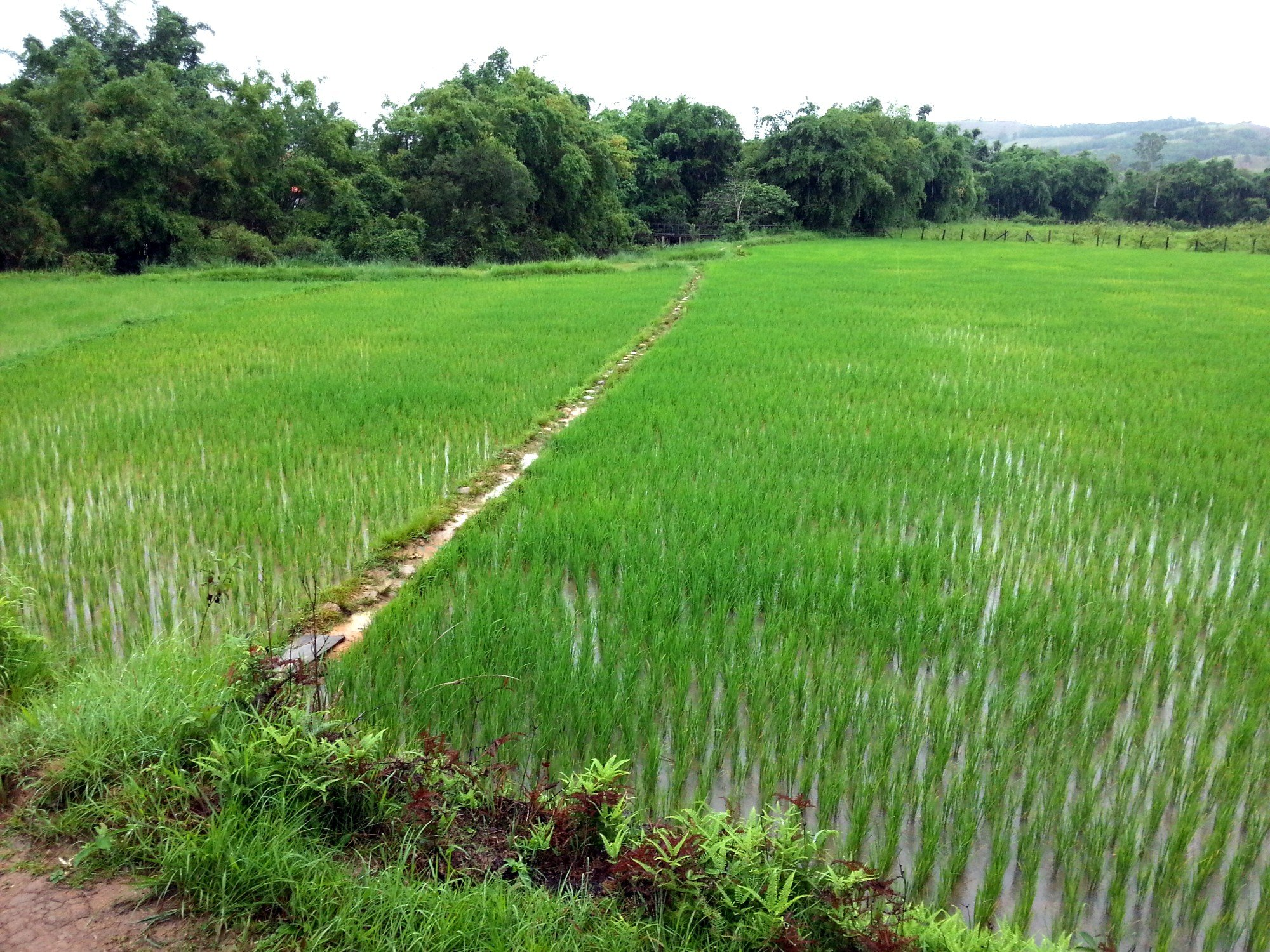 Crossing through the rice paddies at Jar Site 3