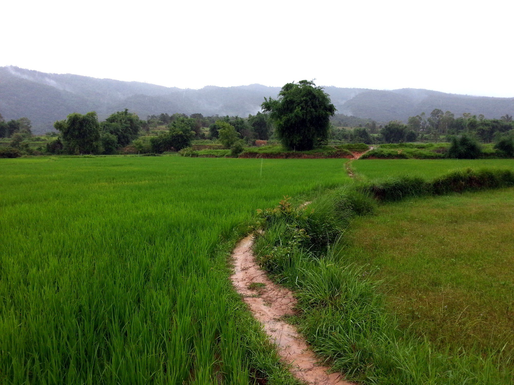 Muddy path to Jar Site 3