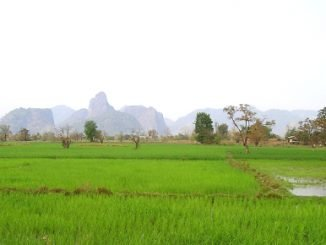 One of the many rice fields in Laos