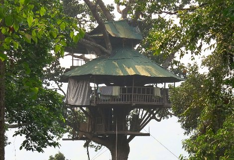 One of the tree houses built by The Gibbon Experience